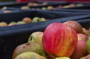 Se necesitan 55 operarios para envasado de fruta en finca agrícola 1