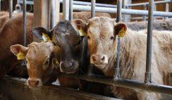 Sueldos de 3.000 € ordeñando vacas: 27 ofertas de empleo 4