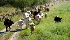 Ofertas de empleo en agricultura y ganadería: peones, esquiladores, jardineros, etc. 9