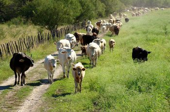 Ofertas de empleo en agricultura y ganadería: peones, esquiladores, jardineros, etc. 2