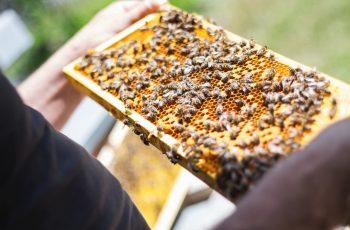 Se necesitan trabajadores de la cría de abeja en Salamanca y Extremadura 1